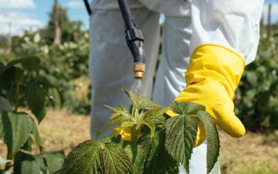 Wie Sie Umweltgifte sanft aus dem Körper leiten