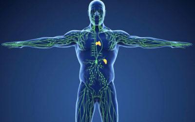 Detox-Boost: 4 Tipps wie Sie Ihre Lymphreingung verbessern. Leichte Sommerbeine, weniger Allergie-Symptome!
