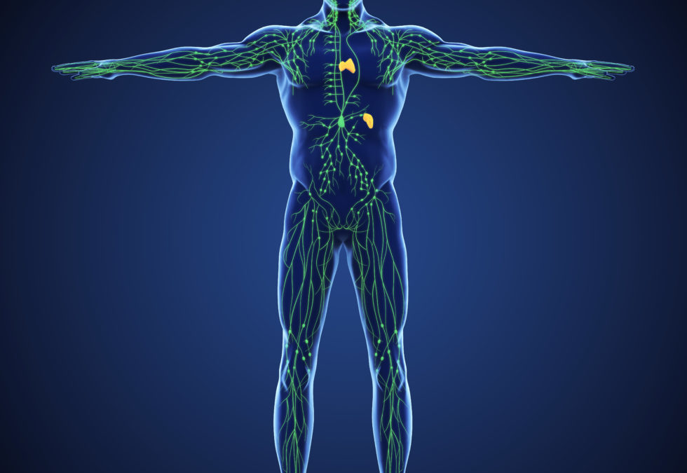 Abnehmen und Immunsystem stärken: Jetzt Lymphsystem mit unseren 4 Schritten unterstützen